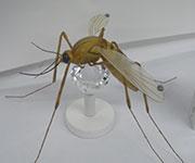 造形作品画像027蚊
